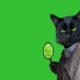 cat detective school english, курсы английского языка,