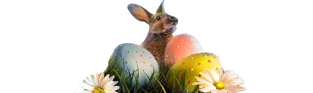 Easter, курсы английского языка в минске, school english, english time,